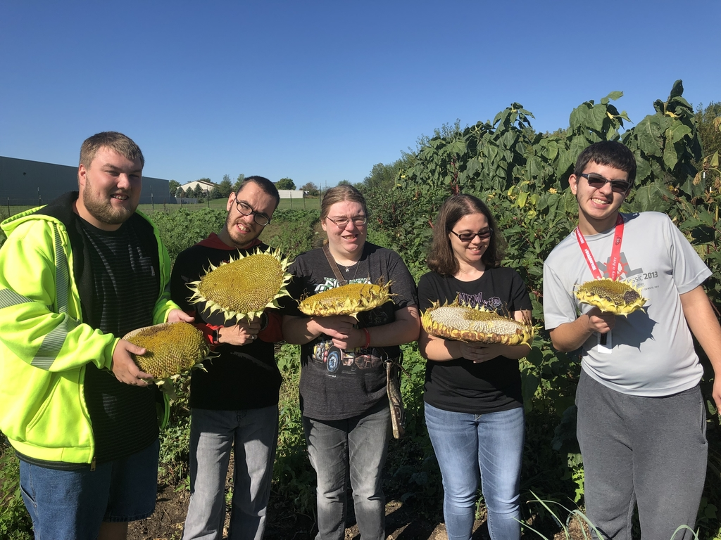 Boerma's class having an EP!C time harvesting sunflowers!